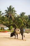 Agonda, Goa, Индия Стоковые Фотографии RF