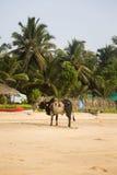 Agonda, Goa, Индия Стоковое Изображение RF