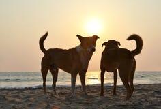 Agonda plaża Południowy Goa, India Obrazy Stock