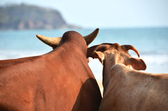Agonda plaża Południowy Goa, India Obrazy Royalty Free