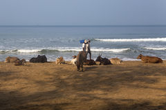 Agonda plaża przy Goa, India Zdjęcie Stock