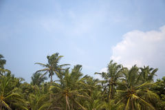 Agonda plaża przy Goa, India Obraz Stock