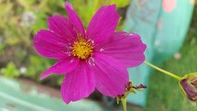 Agora que é cor-de-rosa Foto de Stock