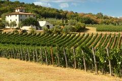 12 agosto 2017: Bella vigna con cielo blu nella regione di Chianti Individuato vicino a Firenze, la Toscana Immagini Stock