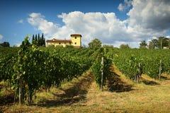 12 agosto 2017: Bella vigna con il cielo nuvoloso blu nella regione di Chianti Individuato vicino a Firenze, la Toscana Immagine Stock Libera da Diritti