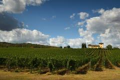 12 agosto 2017: Bella vigna con il cielo nuvoloso blu nella regione di Chianti Individuato vicino a Firenze, la Toscana Fotografia Stock Libera da Diritti