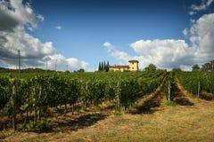 12 agosto 2017: Bella vigna con il cielo nuvoloso blu nella regione di Chianti Individuato vicino a Firenze, la Toscana Immagini Stock Libere da Diritti