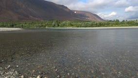 Agosto en el sollozo del río Urales polares, Rusia almacen de video
