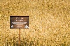 15 agosto 2018, Fiss Austria: Campo imperiale dell'orzo di Fisser fotografia stock