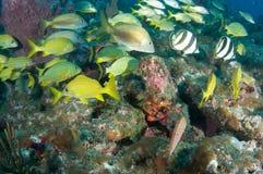 Agrégation de poissons Photo libre de droits