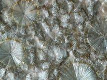 Agrégats radiaux de cristal nacré de wavellite photo stock