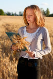 Agrónomo con el documento que analiza los oídos del trigo Foto de archivo libre de regalías