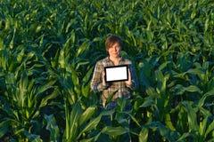 Agrónomo con la tableta en campo de maíz Imágenes de archivo libres de regalías