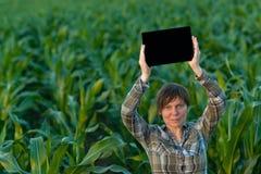 Agrónomo con la tableta en campo de maíz imagen de archivo libre de regalías