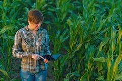 Agrónomo con la tableta en campo de maíz foto de archivo