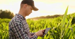 Agrónomo con la tableta en campo vacío desnudo en puesta del sol, hombre confiado serio del granjero usando tecnología moderna ad almacen de metraje de vídeo