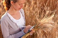 Agrónomo de la mujer joven en el campo de trigo Foto de archivo