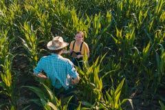 Agrónomo de sexo femenino que aconseja al granjero del maíz en campo de la cosecha fotografía de archivo