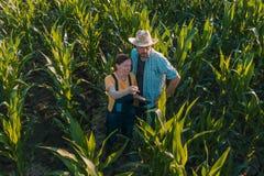Agrónomo de sexo femenino que aconseja al granjero del maíz en campo de la cosecha imagenes de archivo