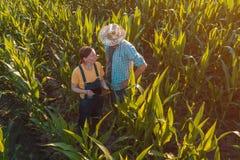 Agrónomo de sexo femenino que aconseja al granjero del maíz en campo de la cosecha fotografía de archivo libre de regalías