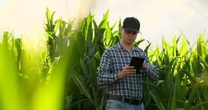 Agrónomo de sexo masculino joven o ingeniero agrícola observando el campo verde del arroz con la tableta digital y la pluma para  almacen de metraje de vídeo