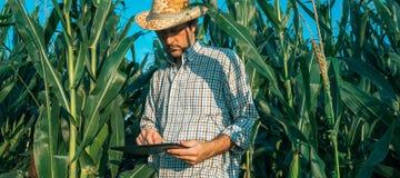 Agrónomo del granjero con la tableta en campo de la cosecha del maíz fotos de archivo