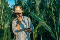 Agrónomo del granjero con la tableta en campo de la cosecha del maíz imagen de archivo libre de regalías