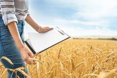 Agrónomo joven con el tablero en campo de grano imagenes de archivo