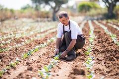 Agrónomo maduro que planta en campo agrícola en invernadero imagen de archivo libre de regalías