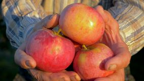 Agrónomo mayor Holds Ripe Apples del granjero en su mano y demostraciones ellas a la cámara almacen de metraje de vídeo
