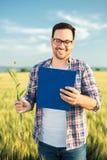 Agrónomo o granjero joven sonriente que examina el campo de trigo antes de la cosecha, escribiendo datos a un tablero Foco select imagen de archivo libre de regalías