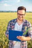 Agrónomo o granjero milenario sonriente que examina el campo de trigo antes de la cosecha, escribiendo datos a un tablero foto de archivo