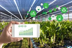 agrónomo Using del hombre del concepto de la tecnología de la agricultura una tableta internacional fotografía de archivo