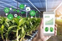 agrónomo Using del hombre del concepto de la tecnología de la agricultura una tableta internacional fotografía de archivo libre de regalías