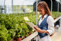 Agrônomo asiático bonito novo da mulher com a tabuleta que trabalha na estufa que inspeciona as plantas Imagem de Stock