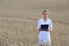 Agrônomo da mulher ou um cientista ou um estudante com original em sua mão no campo de trigo foto de stock royalty free