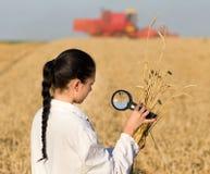 Agrônomo da mulher com magnifer no campo Imagem de Stock