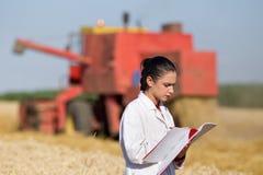 Agrônomo da mulher no campo de trigo fotografia de stock royalty free
