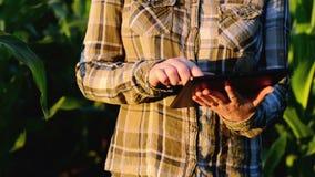 Agrônomo da mulher que usa o tablet pc no campo de milho cultivado agrícola no por do sol vídeos de arquivo