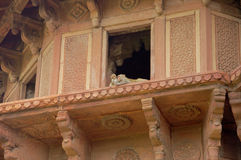 Agra Fort Zdjęcia Royalty Free