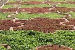 Agra fort, ogrodowy architektoniczny szczegół Obrazy Stock