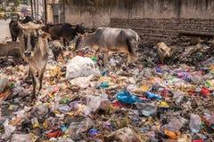 Agra Ragiastan India Fotografia Stock
