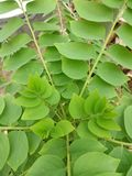 agradável e muito verde e verde no img e na fotografia agradáveis na foto fotos de stock