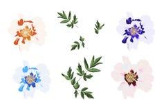 Agrafe Art Set de vecteur de pivoine de 4 fleurs et feuilles Illustration Stock