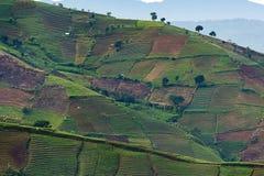 Agrapura葱种植园,印度尼西亚 免版税库存图片