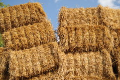 Agrar 221. A staple of straw bales at a field Stock Photos