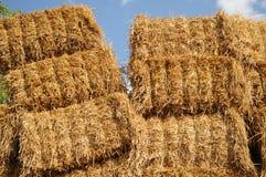 Agrar 221 Photos stock