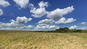 Agrarian field. View of the agrarian field in summer Stock Photo