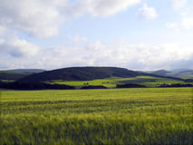 Agrarian landscape Stock Images