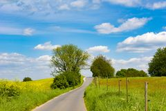 Agrarian rape fields and meadows with curved path, rural landscape in spring Royalty Free Stock Photography